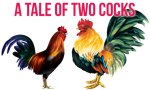 A Tale Of Two Cocks