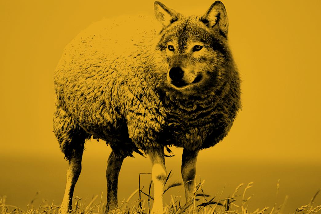 """Asking The Community: How Do We Define """"A Predator?"""""""